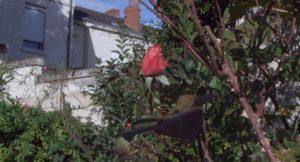 Film Presque un siècle - jardin